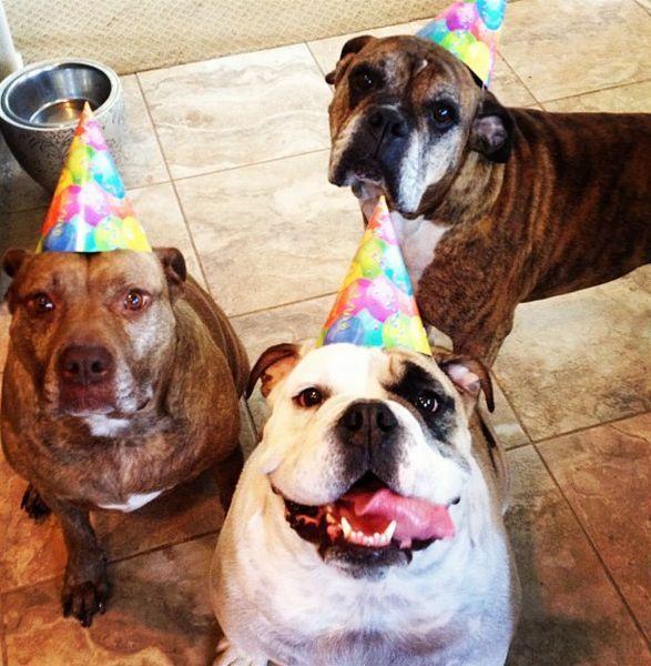 Демотиватор день рождения с животными