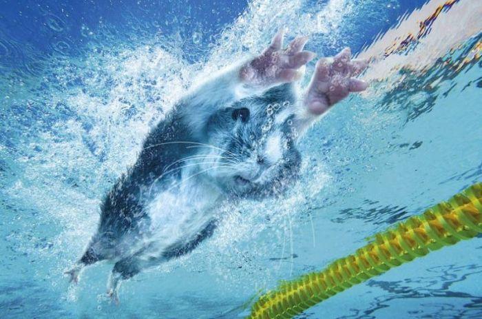 Юмористический олимпийский календарь (12 фото)