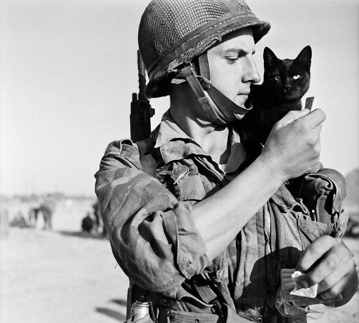 Архивные фотографии с войны о преданности котов хозяевам (30 фото)