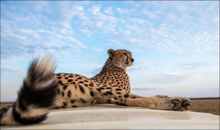 Съемка диких животных в Сафари