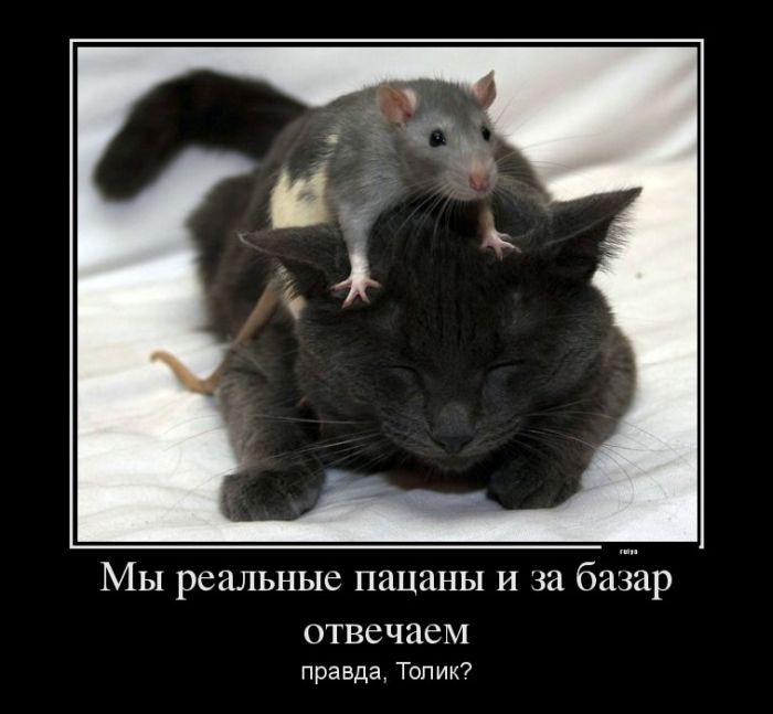 Подборка демотиваторов про животных