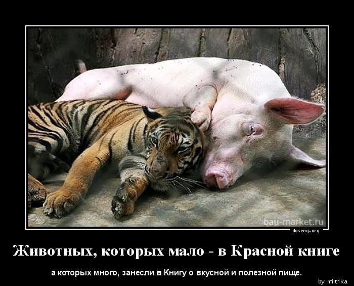Секс с тигром фото 13 фотография