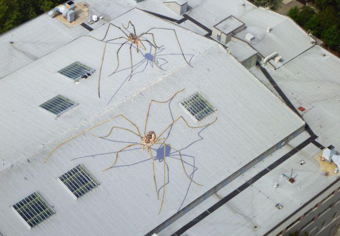 Иллюзия на крыше (4 фото)