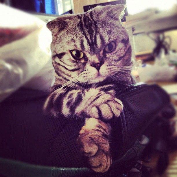 Шиши Мару - кошка-звезда редактора Instagram