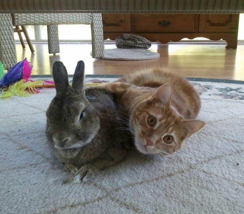 Прикольные картинки с зайцами и котиками