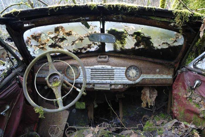 Таинственные снимки заброшенных американских авто в лесу