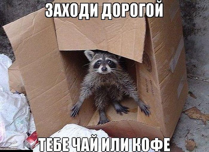 Фото приколы поржать ру: