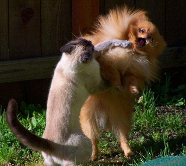 Коллекция снимков котиков, сделанные в нужный момент