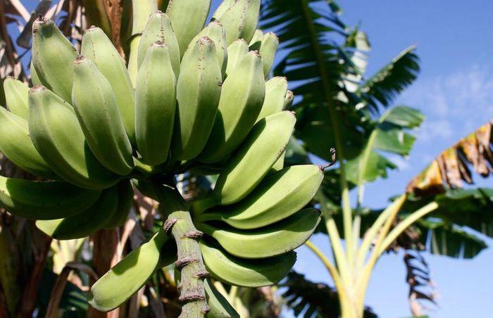 Об экзотических фруктах, которые можно найти на наших прилавках