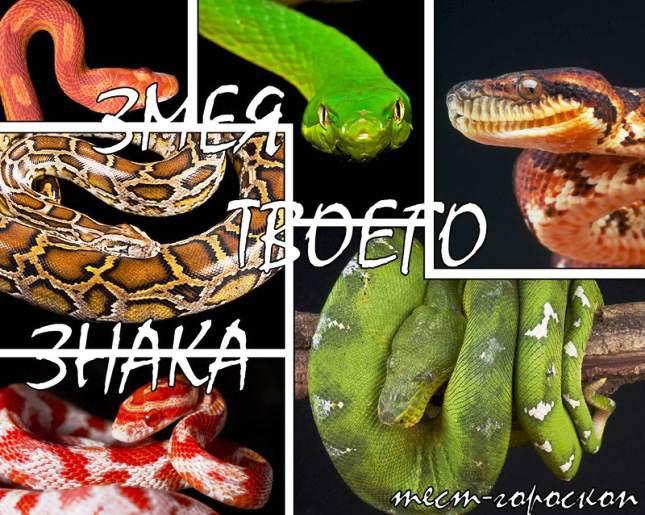 Интересный гороскоп на 2013 год Змеи