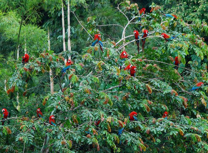 Захватывающие кадры из амазонских