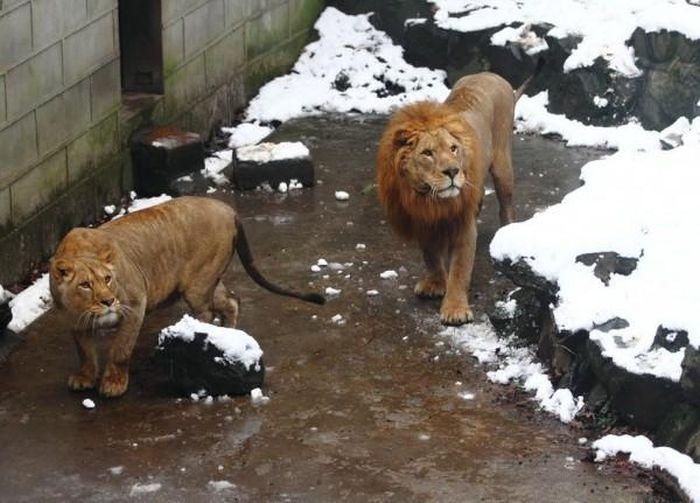 Странная забава в зоопарке в Китае