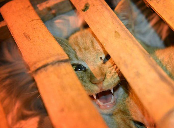 Спасение тысячи котов