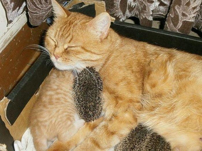 Настоящая кошка-мать (10 фото)