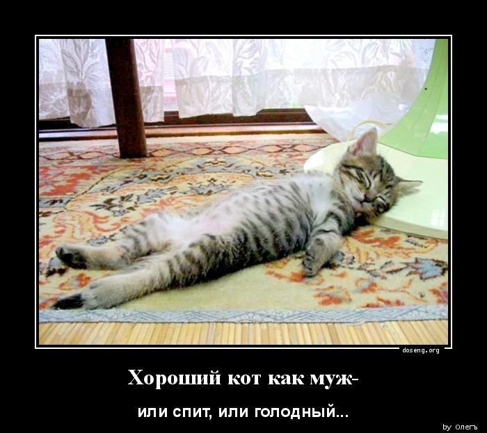 Демотиватор не дает спать