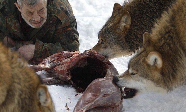 Бывший десантник Вернер Фройнд и его волки