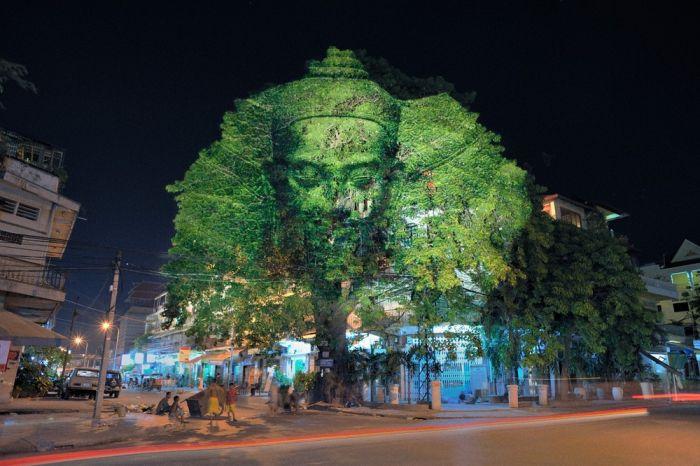 Лица на деревьях