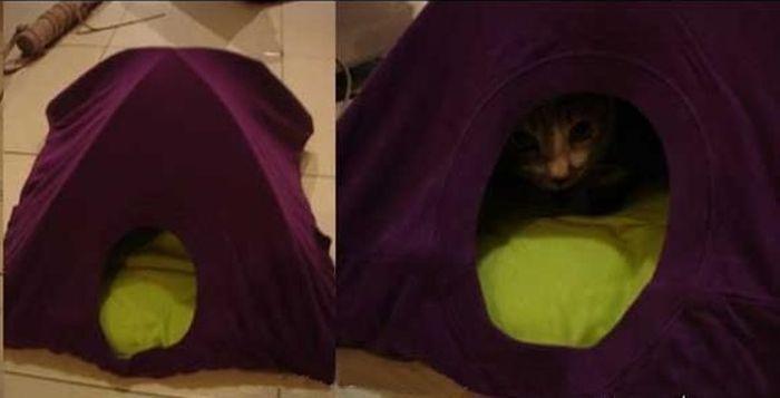 Домик для кошки из коробки и футболки