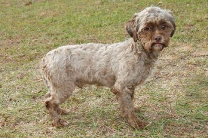 Необычный пес c человеческой мордашкой