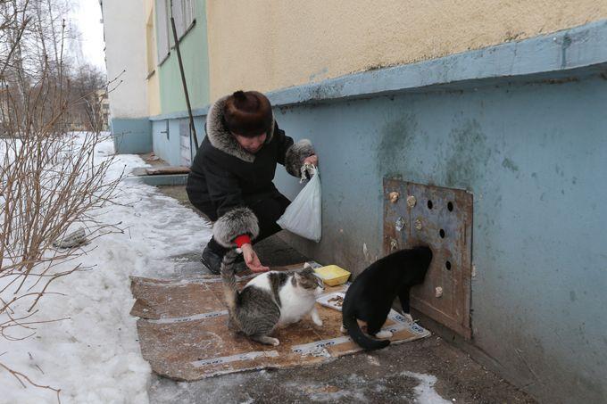 Как минские коммунальщики заживо хоронят котов