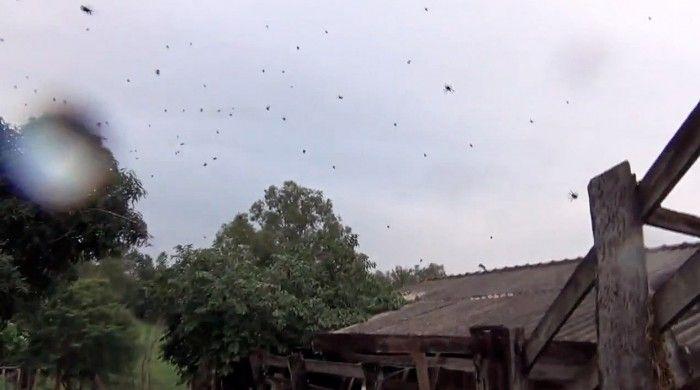 На Бразилию «пролился» настоящмй дождь из пауков