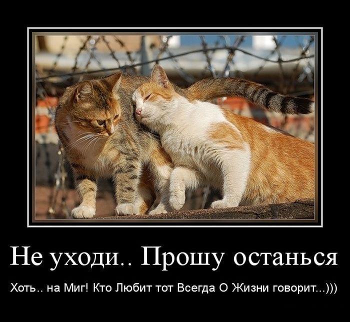 Приколы про любовь картинки на русском, именинам