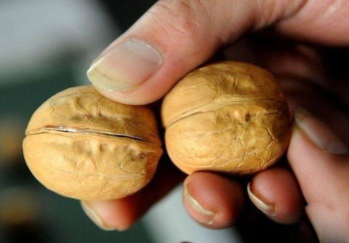 Липовые грецкие орехи