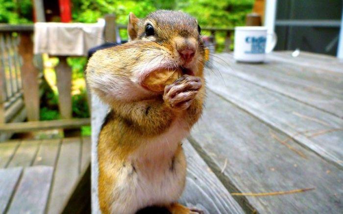 Милые и позитивные фотографии животных