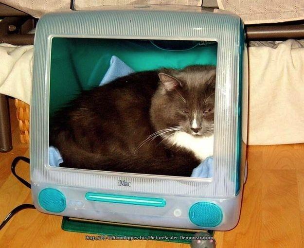 Домики для котов из старых маков