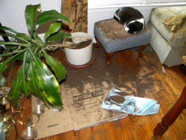 Нашкодившие домашние питомцы