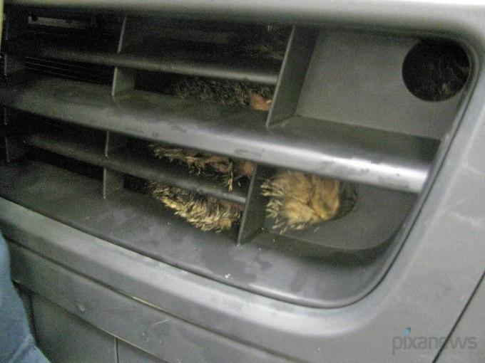 Кошка пережила душ в автомойке