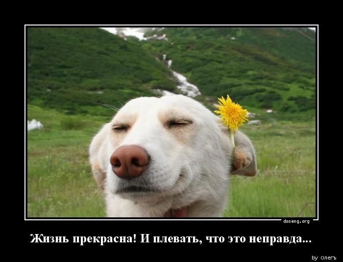Жизнь прекрасна и плевать что это