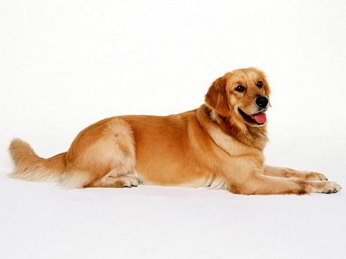 10 трогательных историй о собачьей преданности