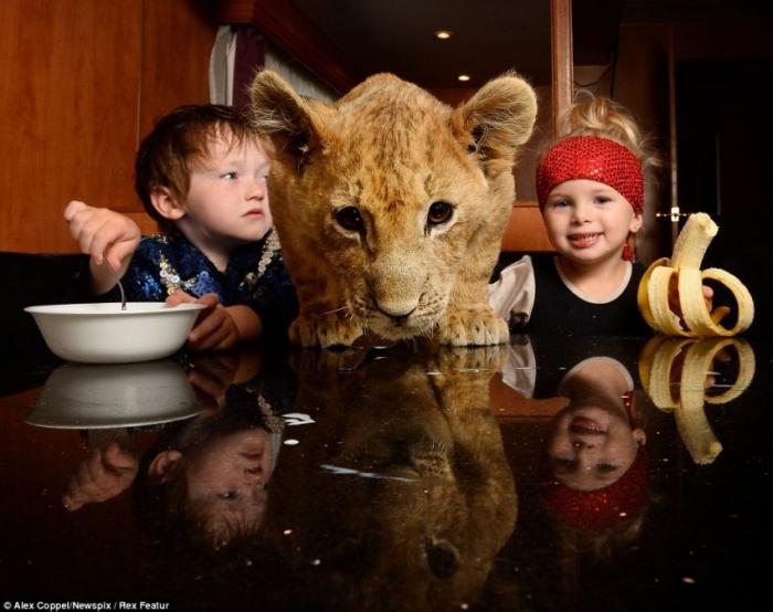 Маленький циркач и его питомец – львенок Цимби