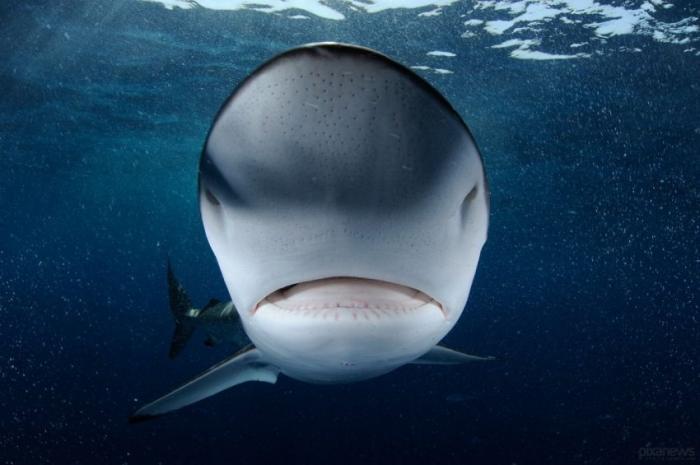 Торговля акулами Аравийского моря