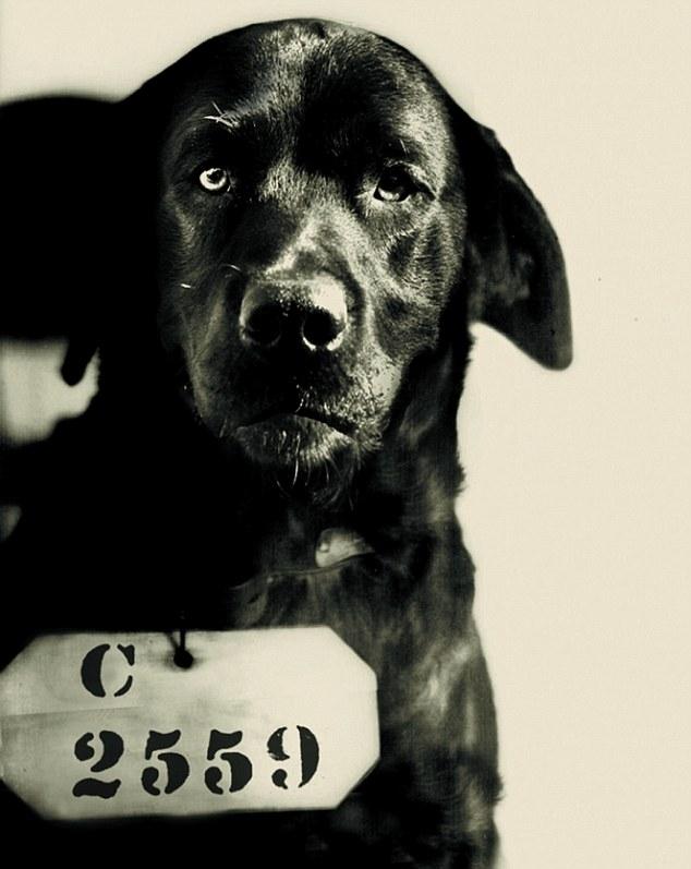 Собака приговорена к пожизненному заключению