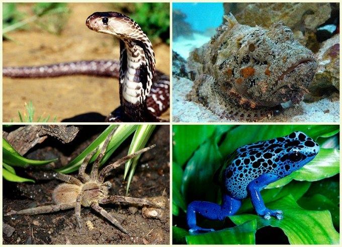 5 самых смертельно опасных животных