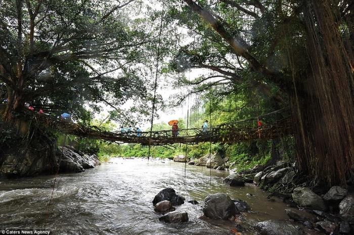 Индонезийский живой мост