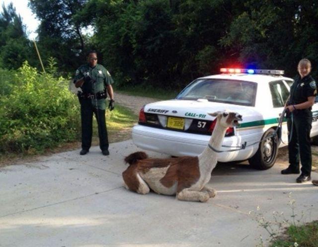Приколы которые можно увидеть только во Флориде