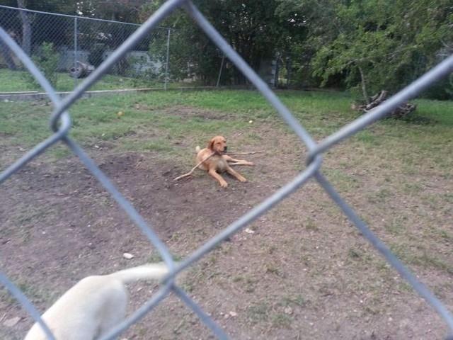 Забавный фотоотчет о двух собаках