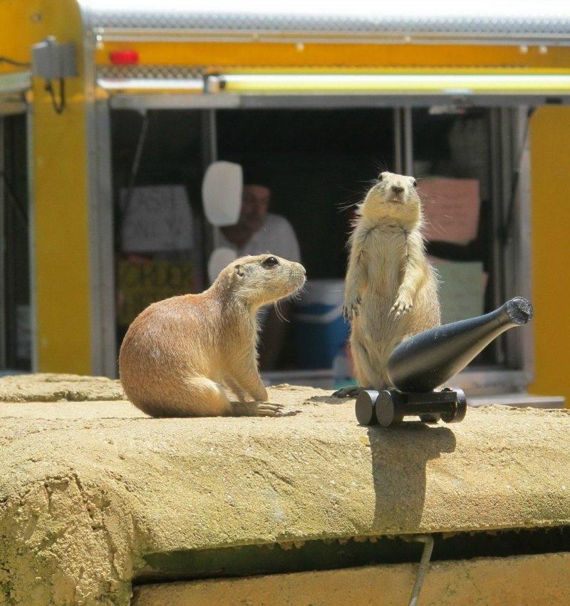 еще смотреть смешные животные новый выпуск вот если
