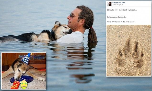 Удивительная собака, фото которой тронуло весь мир
