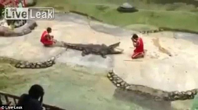 Крокодил едва не откусил голову артисту