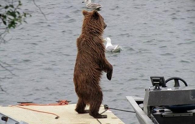 Медвежонок на водном скутере