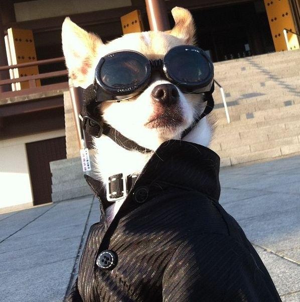 Самая стильная собака на свете