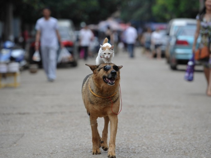Пес и кошка – неразлучные друзья