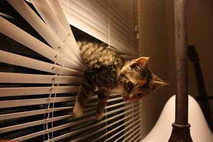 Коты и жалюзи
