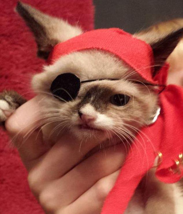 Котенок пират