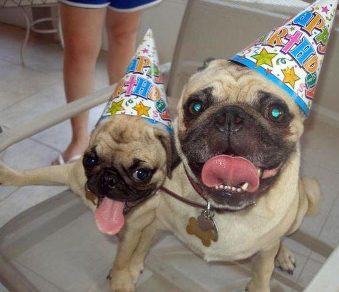 День рождения у животных