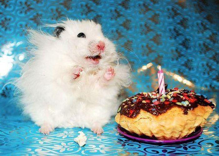 Суббота вечер, открытка с днем рождения животные